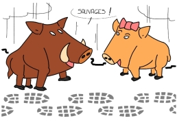 – Savages ! https://gilscow.wordpress.com/2016/01/31/sangliers-wild-boars/