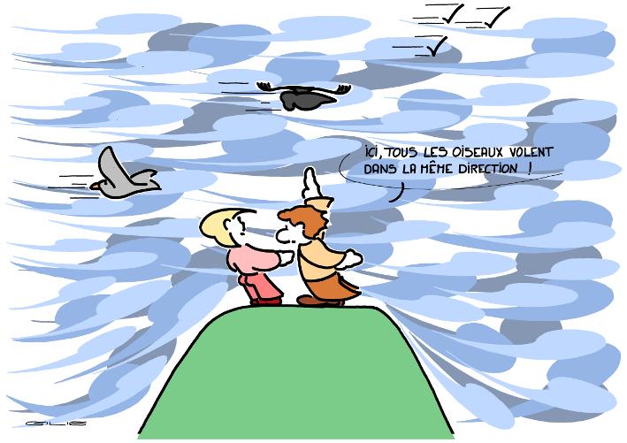 4543_oiseaux_100