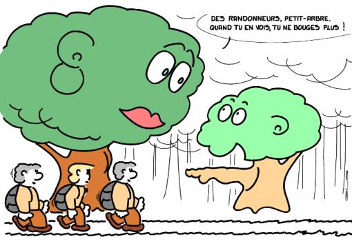4700_petit-arbre_100