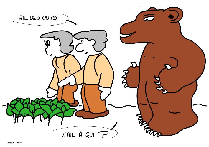 5324_ail des ours_100