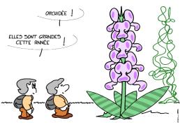 5325_orchidee_100