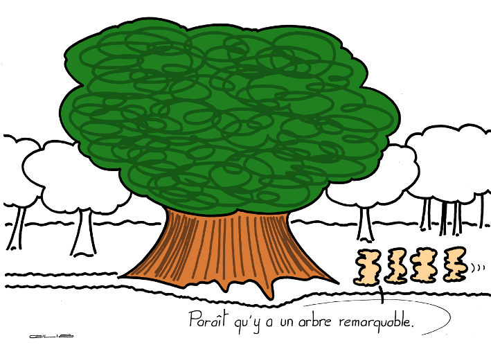 5513_arbre remarquable_100
