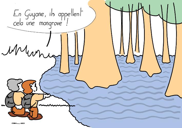5935_mangrove_100