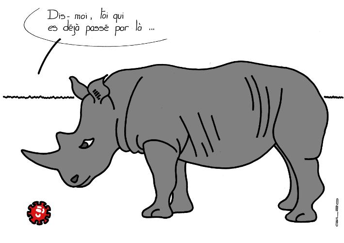 6082_rhinoceros_100